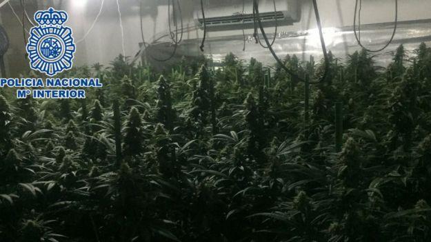 Desmanteladas tres plantaciones indoor de marihuana en la provincia de Málaga