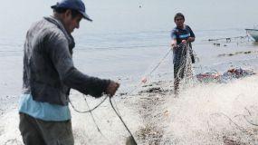 La pesca mundial caerá un 20% por el calentamiento global