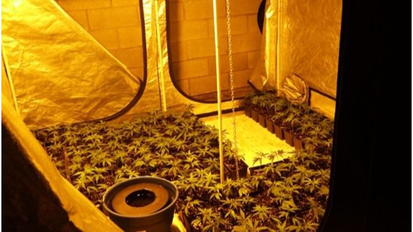 Desarticulada una organización serbio-bosnia dedicada al tráfico internacional de hachís y marihuana
