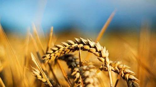 El Gobierno reduce el IRPF a los agricultores y ganaderos afectados por la sequía