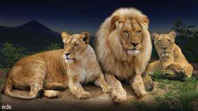 Ser icónico y emblemático no te libra de la extinción