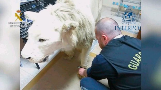 Detenidas e investigadas 104 personas por tenencia y tráfico de especies protegidas