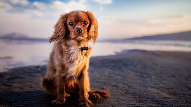 Cinco destinos económicos con playa canina en España