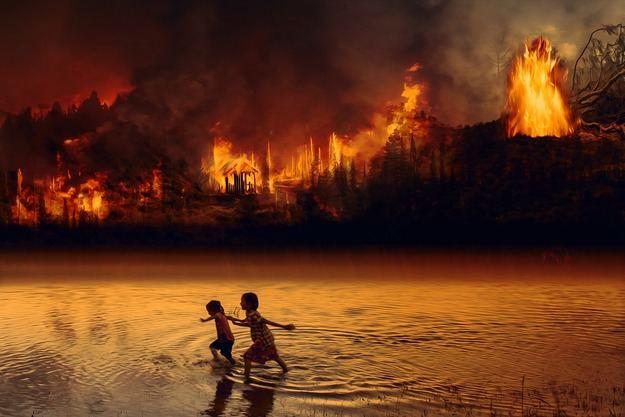 ¡Que los Estados dejen de incendiar el Amazonas!